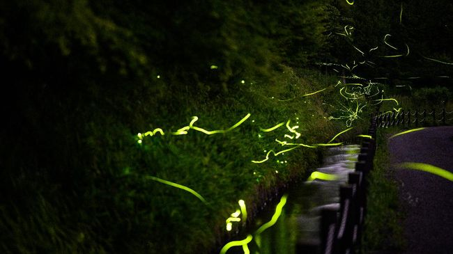 This long exposure picture taken on June 16, 2020 shows fireflies at Tatsuno Hotarudoyo Park in Tatsuno in Nagano Prefecture. - The Tatsuno Firefly Festival, held annually in mid-June, was cancelled this year due to the COVID-19 coronavirus outbreak. (Photo by Philip FONG / AFP) / TO GO WITH Japan-nature-animal-virus-health,FOCUS by Harumi OZAWA