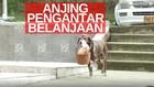 VIDEO: Anjing Penjaga