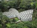 Dedikasi Kakek Menjaga Kebun Raya Seorang Diri kala Pandemi