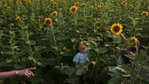 Carlota Sanchez, 7, tries to smell a sunflower as she visits the Columbia Bottom Conservation Area with her sisters Olivia and Marina and their mother, Cristina Palacios, Tuesday, July 7, 2020, in Spanish Lake, Mo. The Chesterfield, Mo., family spent their outing visiting some of the fields and taking photographs. (Robert Cohen/St. Louis Post-Dispatch via AP)