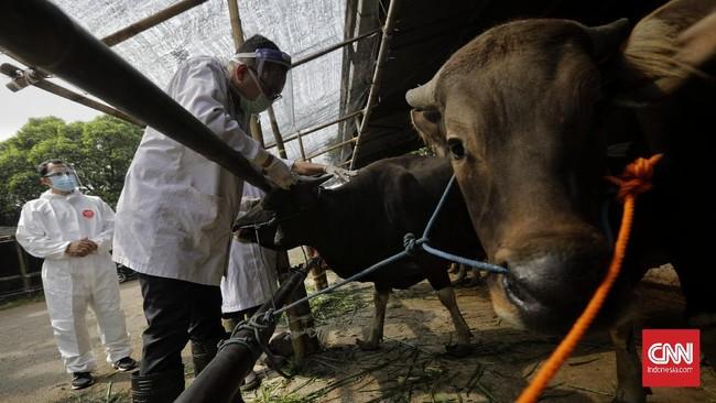 Petugas dari Pusat Pelayanan Kesehatan Hewan dan Ternak (Pusyankeswannak) Dinas Ketahanan Pangan, Kelautan, dan Pertanian (KPKP) DKI Jakarta memeriksa gigi seekor sapi di Rumah Potong Hewan (RPH) Cakung, Jakarta, Jumat, 10 Juli 2020. CNN Indonesia/Adhi Wicaksono