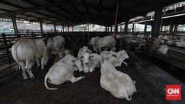 Pandemi Corona, Daging Kurban Boleh Dibagikan Bentuk Olahan