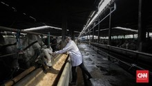 FOTO : Kegiatan Cek Kesehatan Hewan Kurban di RPH Cakung