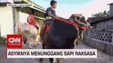 VIDEO: Asyiknya Menunggangi Sapi Raksasa