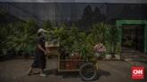 Suasana di Taman Anggrek Ragunan, Jakarta, Kamis, 9 Juli 2020. Taman Anggrek Ragunan menawarkan beragam jenis tanaman hias dengan harga mulai dari puluhan ribu hingga jutaan rupiah. CNN Indonesia/Bisma Septalisma