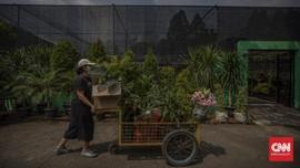 Janda Bolong & Tanaman Hias yang Harganya Naik Sejak Pandemi