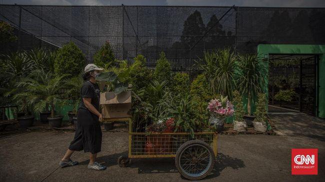 Janda Bolong Tanaman Hias Yang Harganya Naik Sejak Pandemi