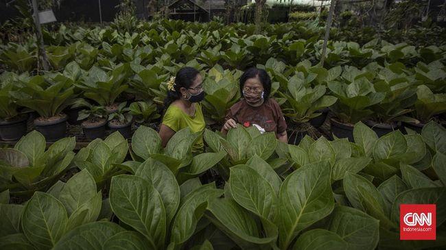 Usai ke Taman Margasatwa Ragunan, jangan lupa menyambangi Taman Anggrek Ragunan, destinasi wisata belanja tanaman hias yang terbilang lengkap.