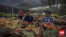 FOTO: Berburu Tanaman Hias di Selatan Jakarta