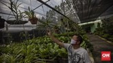 Suasana di Taman Anggrek Ragunan, Jakarta, Minggu, 12 Juli 2020. Taman Anggrek Ragunan menawarkan beragam jenis tanaman hias dengan harga mulai dari puluhan ribu hingga jutaan rupiah. CNN Indonesia/Bisma Septalisma