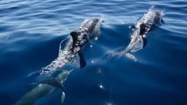 Turis Kembali ke Pantai, Lumba-lumba & Paus Menyudahi Liburan