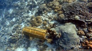 Perburuan Anemon Rusak Terumbu Karang Pulau di Alor