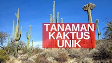 VIDEO: Kaktus Tumbuh Setinggi Apartemen