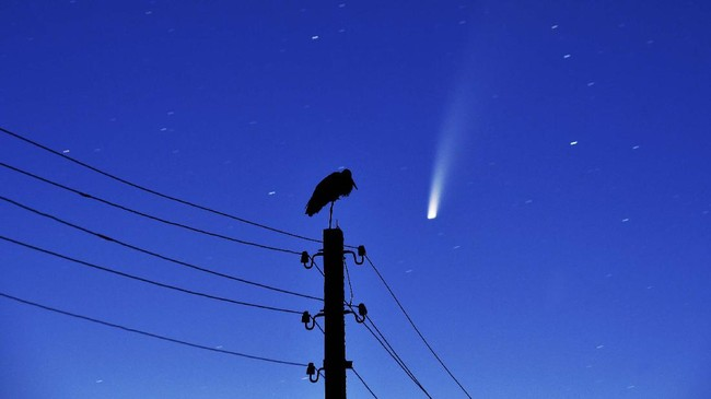 A stork stands on a power lines pillar as the comet C/2020 F3 (NEOWISE) is seen in the sky above the village of Kreva, some 100 km northwest of Minsk, early on July 13, 2020. (Photo by Sergei GAPON / AFP)
