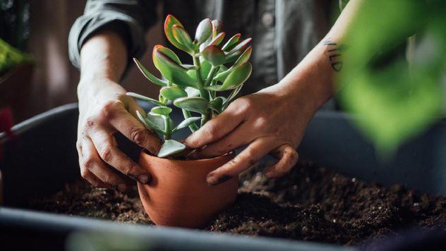 Gaya hidup masyarakat yang lebih sering di rumah meniupkan angin segar ke bisnis tanaman hias.