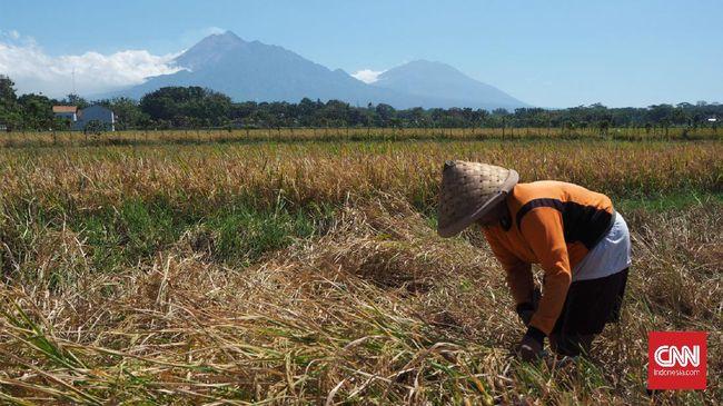 BPS mencatat Nilai Tukar Petani (NTP) naik 0,49 persen pada Juli 2020 menjadi 100,09 dibandingkan bulan sebelumnya.