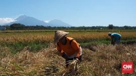 Petani Tak Perlu Setor Pajak dalam PMK 89/2020