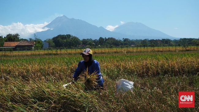 BPS mencatat rata-rata nominal upah buruh pertanian naik sebesar 0,2 persen pada Juli 2020 dari Rp55.503 per bulan menjadi Rp55.613 per bulan.