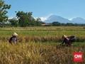 Nilai Tukar Petani Membaik Jadi 100,65 per Agustus