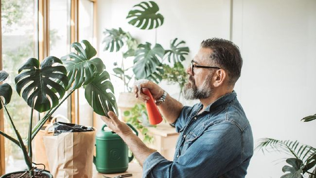 Mature man caring about his plants during corona virus isolation period