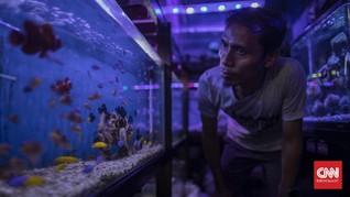 FOTO : Penjual Ikan Hias Bertahan di Tengah Pandemi