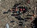 36 Meninggal, Korban Banjir Luwu Utara Diprediksi Bertambah