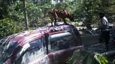Anggota Kepolisian bersama anjing pelacak mencari korban di sekitar kendaraan yang tertimbun material lumpur banjir bandang di Desa Radda, Kabupaten Luwu Utara, Sulawesi Selatan, Minggu (19/7/2020). Sebanyak dua anjing pelacak dikerahkan guna mencari korban yang masih tertimbun material lumbur akibat diterjang banjir bandang. ANTARA FOTO/Abriawan Abhe/foc.