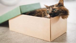 Alasan Kucing Suka Meringkuk dalam Kardus