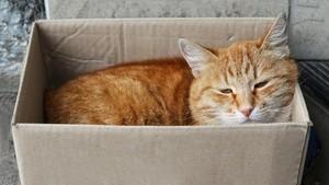 Studi Temukan Infeksi Covid-19 dari Manusia ke Kucing