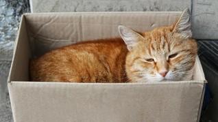 Kucing Peliharaan Terkenal Usai Kunyah Ijazah Majikan