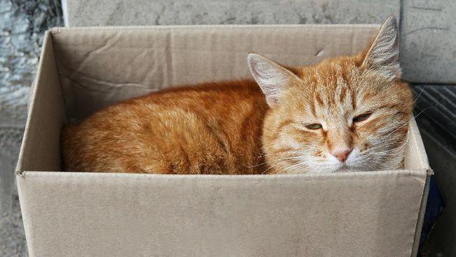 Sebuah temuan kasus Covid-19 di Inggris menunjukkan bahwa virus SARS-CoV-2 dapat menular dari manusia ke kucing peliharaan.