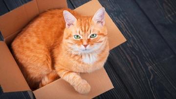 ilustrasi kucing meringkuk di kardus 169