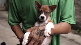 FOTO:Menjaga Nyaring Gonggongan Anjing Telantar saat Pandemi