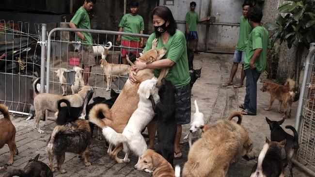 Jumlah anjing yang telantar di ibu kota tampaknya melonjak saat pandemi.
