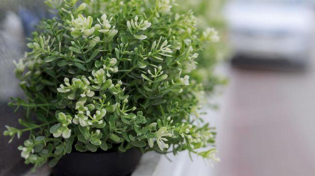 Ada baiknya mempertimbangkan beberapa hal saat menata tanaman hias, seperti tekstur, ukuran hingga warna tanaman demi mendapatkan kombinasi yang elok.