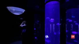 VIDEO: Sensasi Dikelilingi Ubur-ubur di Akuarium Jepang