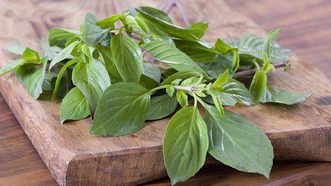 Kemangi yang dikenal dengan herba kuliner ini biasa digunakan untuk makanan, tapi rupanya tanaman bernama latin Ocium basilicum ini menyimpan manfaat kesehatan.