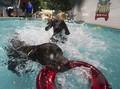 Waterpark Khusus Anjing Buka di Dubai