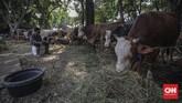 Wabah Covid-19 yang menyerang Indonesia sejak Maret lalu berdampak bagi berbagai sektor usaha, salah satunya penjualan hewan kurban.