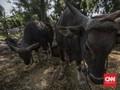 FOTO: Geliat Penjualan Hewan Kurban Saat Pandemi