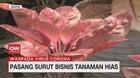 VIDEO: Pasang Surut Bisnis Tanaman Hias