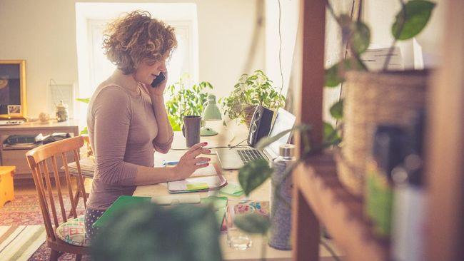 Absennya tanaman hias dari ruang apartemen yang sempit bisa berdampak buruk untuk kesehatan mental dan fisik.
