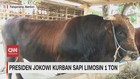 VIDEO: Presiden Jokowi Kurban Sapi Limosin 1 Ton
