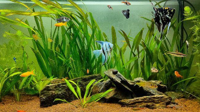 Selain meningkatkan estetika, tanaman hias air juga bisa memurnikan air dan jadi habitat ikan. Berikut jenis tanaman hias air aquascape yang bisa coba ditanam.