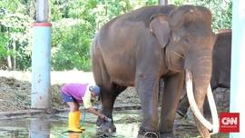 Semarang Zoo, Rumah Covi & Vivid yang Bertahan kala Pandemi