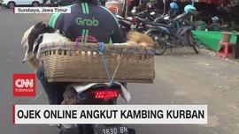 VIDEO: Ojek Online Angkut Kambing Kurban
