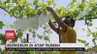 VIDEO: Berkebun di Atap Rumah