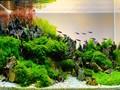 11 Jenis Tanaman Aquascape untuk Mempercantik Akuarium