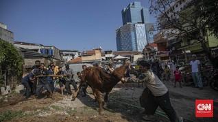 FOTO : Prosesi Penyembelihan Hewan Kurban Saat Pandemi Corona
