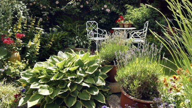 Mempercantik kebun tak melulu dengan tanaman hias berbunga. Berikut rekomendasi tanaman hias daun outdoor yang dapat membuat kebun minimalis lebih hidup.